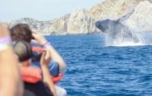 Whale Watching Photo Safari