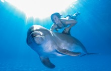 Dolphin Extreme