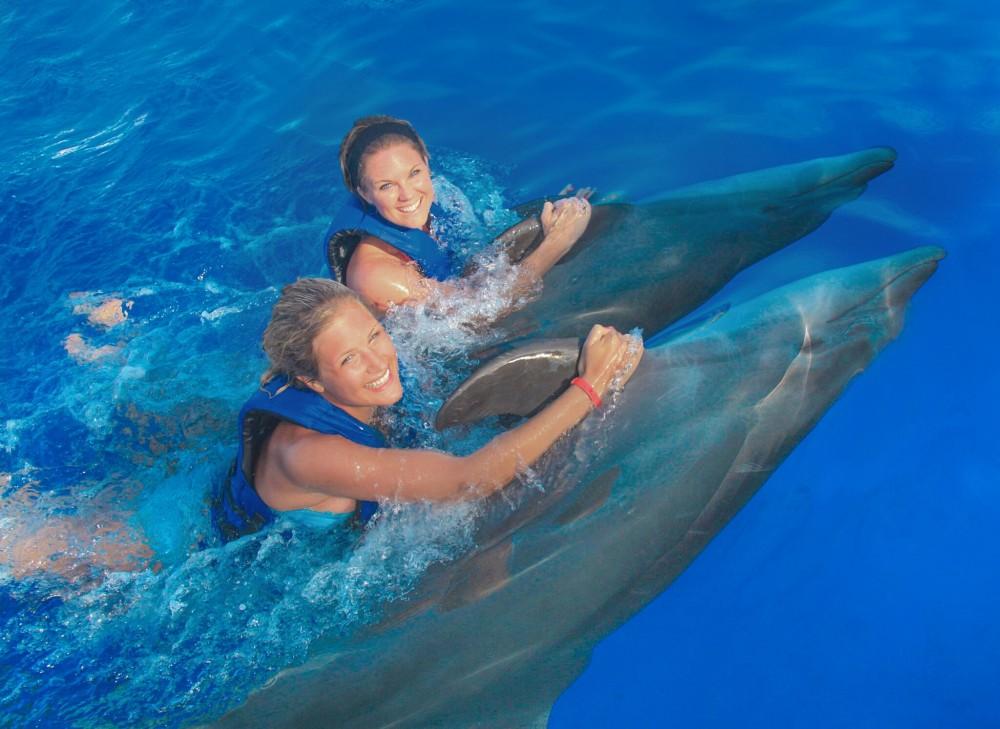 Dolphin signature swim puerto vallarta project expedition New mexico swimming pool regulations