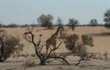 Kgalagadi Transfrontier Park 5 Days / 4 Nights Kalahari Safari