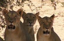 Kalahari Camping Tours 3 Days 2 Nights