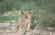 Kalahari Camping Tours 6 Days 5 Nights