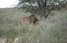 Kalahari Camping Tour 10 Days 9 Nights