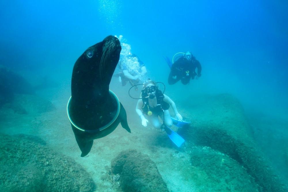 Las Caletas Two tank Dive With Sea Lions