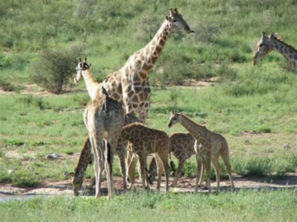 14 Days Kgalagadi, Augrabies, Witsand, Mokala NP Safari