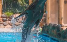 Sea Lion Encounter