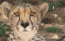 Kgalagadi To Cape Town Safari 12 Days
