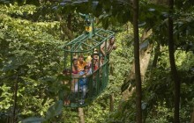Rainforest Adventures: Aerial Tram Adventure