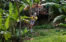 Rainforest Adventures: Adrenaline Zip Line