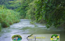 Ocho Rios Bamboo River Rafting