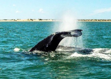 A picture of Gray Whale Watching