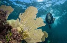 Snorkeling Adventure Tour