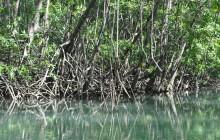 Damas Island mangrove's boat tour