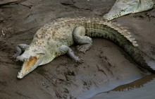 Jungle River & Crocodile Adventure Tour