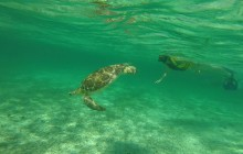 Turtle Watching & Cenote Adventure