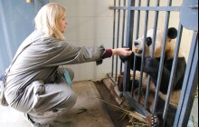 Volunteer At Chengdu Dujiangyan Panda Rescue Center