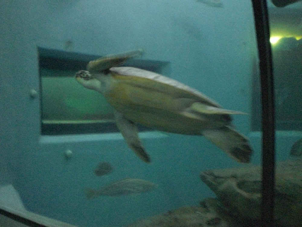 National Marine Aquarium Of Namibia