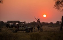 4 Nights On Mobile Safari