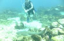 9 Dives
