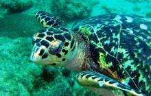 10 Dives