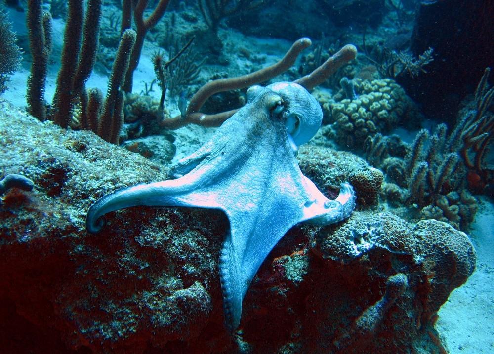 Skin Diver Course