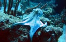 R & Sea Divers
