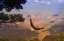 Grand Canyon West Rim Tour with Helicopter and Pontoon