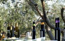 Olive Oil Tour In Split, Croatia