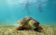 Caneel & Henley Cay - Kayak, Hike & Snorkel Adventure
