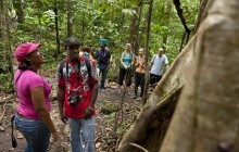 Rainforest Adventures: Jacquot Trail Hike