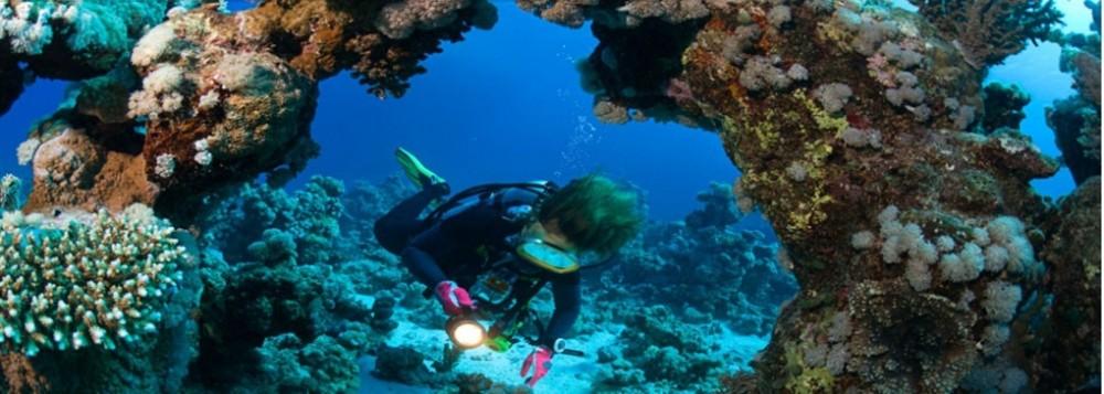 Discover SCUBA Diving 1 Dive