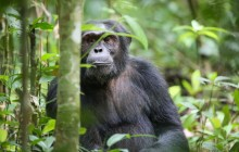 9 Days Uganda Rwanda Gorilla Habituation, Wildlife Adventure