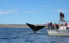 Impressive Wildlife Cultural Heritage of Patagonia Pioneers