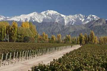 A picture of Mendoza / Andes & Wine