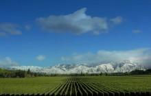 Mendoza / Andes & Wine
