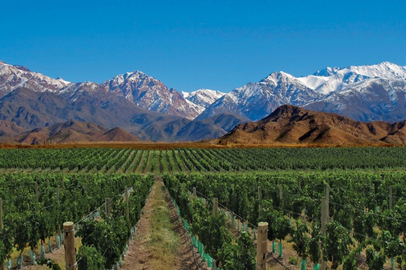 Mendoza Wine Tour