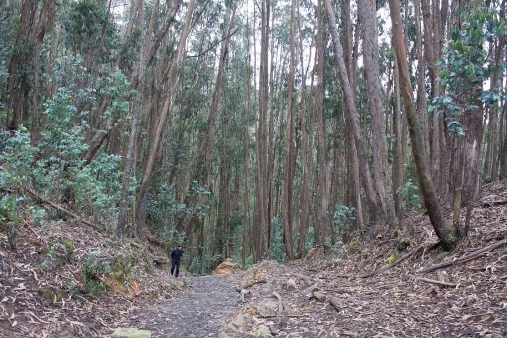East Hills Hike