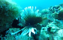 Lion fish Diving Xperience By Boat