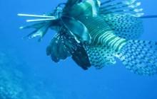 Lion Fish Hunt Shore incl BBQ location Coral Estate