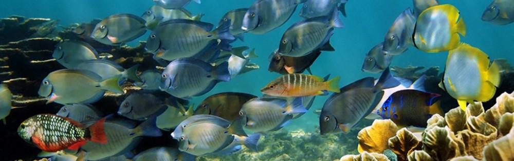 Akumal & Cenotes Snorkeling