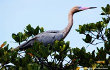 Birding Grand Bahama Half Day Tour