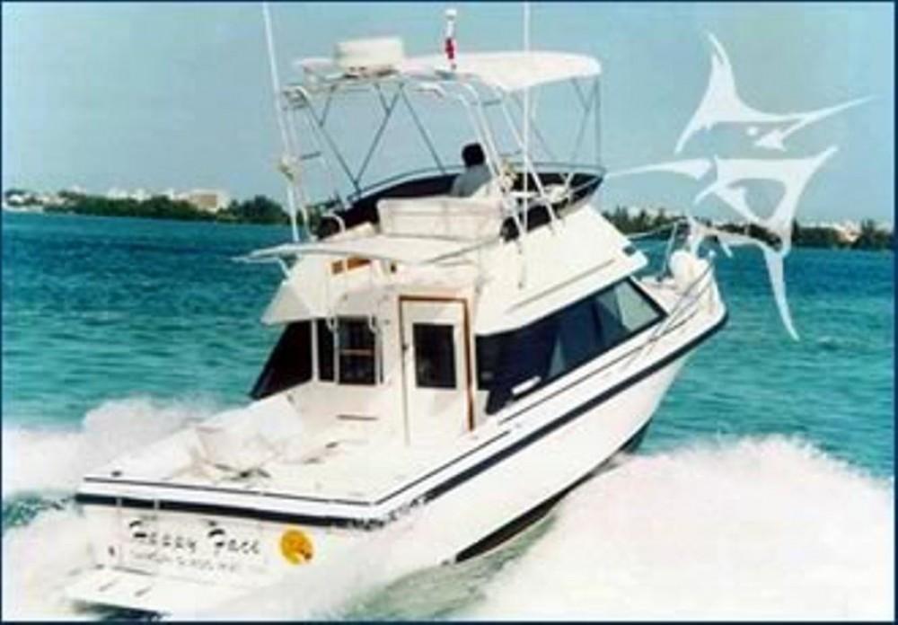 Phoenix 31' Fishing Yacht Rental