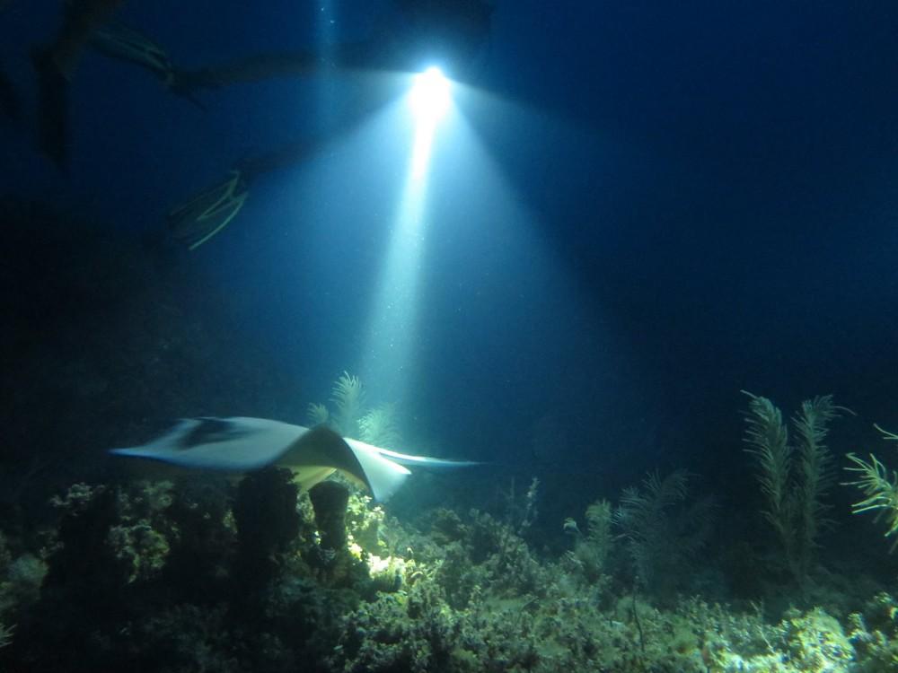 Night Dives