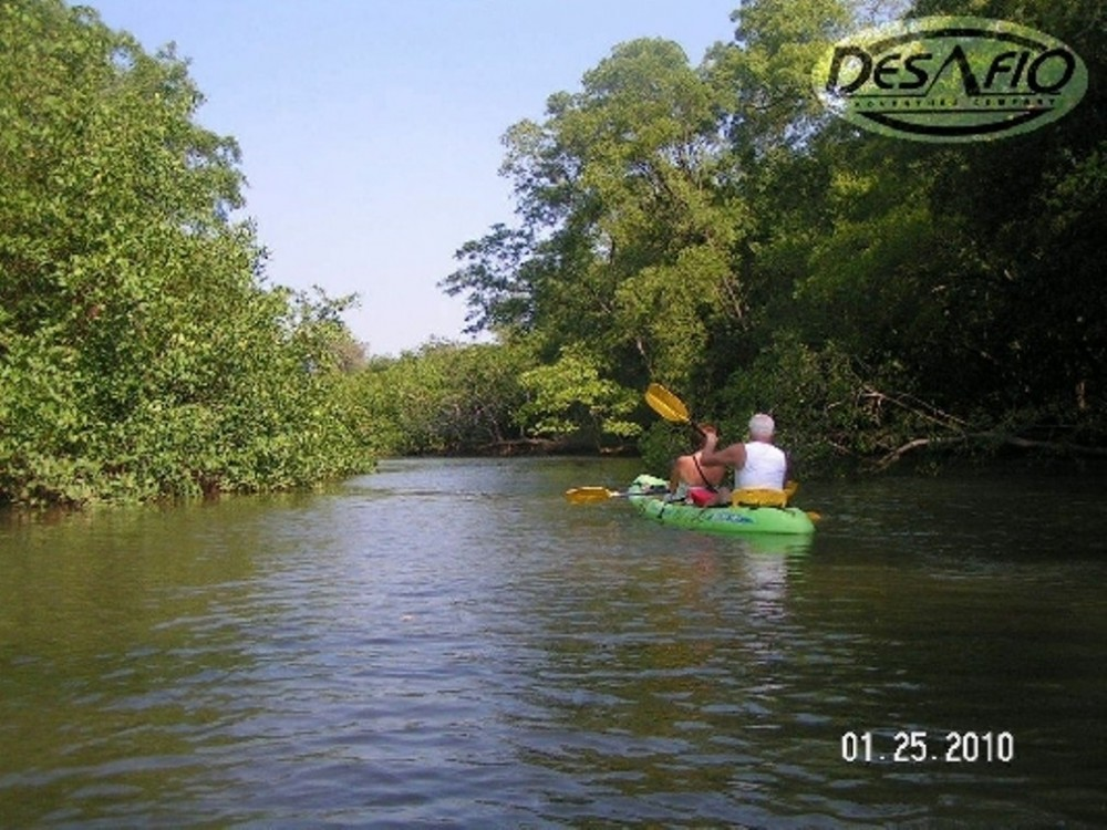 Wildlife & Birding River Kayaking Tour