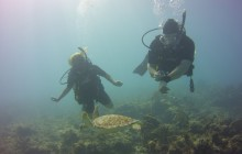 Open Water Referral Dives - French Side
