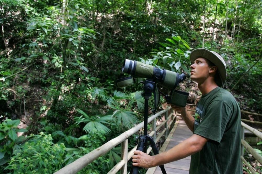 Costa Rica Atlantic: Bird Watching