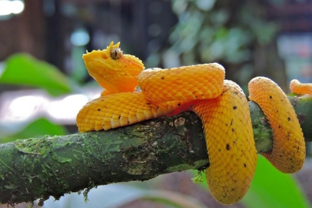 Costa Rica Atlantic: Nature Exploration