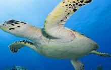 Akumal & Cenotes 2 dives