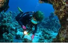 Cozumel 2 Dives
