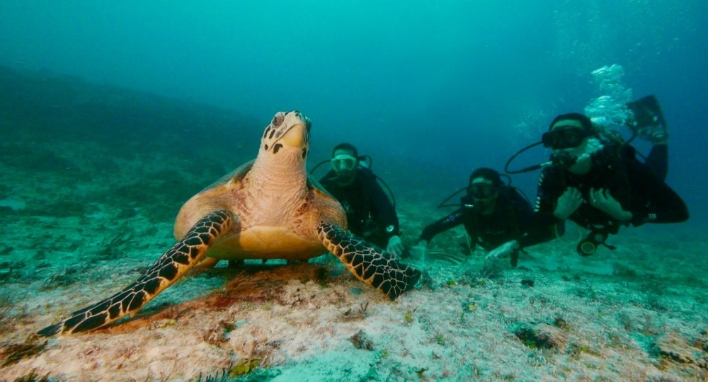 Open Water Diver Course with E learning